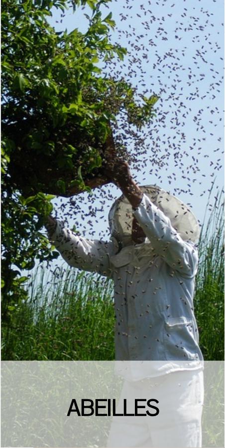 accueil au nid de guepes abeilles